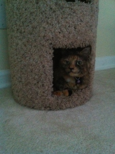 Athena, looking on judgingly from her cat-condo.