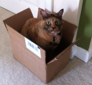 Step one: you put a cat in a box...