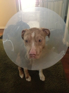 """i broke my cone mama.  you got duckytape?"""